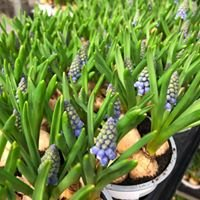 Trioflor Pflanzenhandel