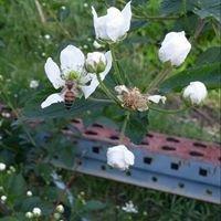 Dixie Honey Company LLC