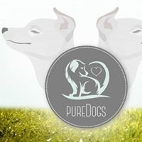 Pure Dogs