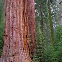 Sequoia Travel Network