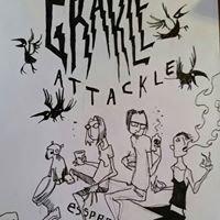 The Grackle Coffee Company