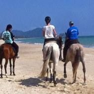 Khanom Horse Tours