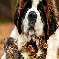 Pfötchen Alles Gute für Hund & Katz