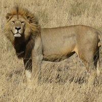 Safari Arts Expeditions and culture