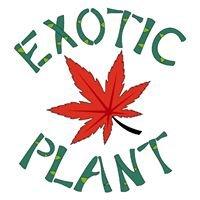 Exoticplant