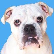 White Bulldog | Website Design, Online Marketing & New Media