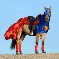 ROSARITO HORSES 4 RENT