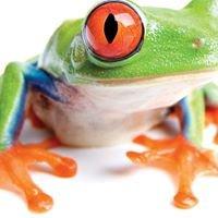 Jamfrog Design
