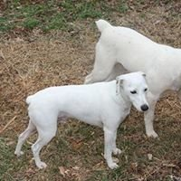 White Dog Farm  Ararat VA