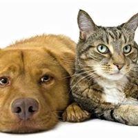Tierhilfe Südbrandenburg e.V. Tiervermittlung