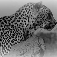 Cats of Africa Tours & Travel