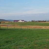 Bushy Park Farm
