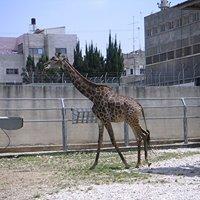 Qalqilya Zoo