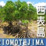 西表島(Iriomotejima、Okinawa)
