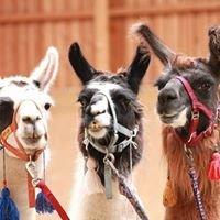 Initiative MUT - Lama & Pferd - Reiten in Bayerisch Gmain
