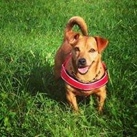 Mantrailing und Hundetraining München