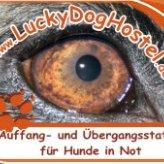 Lucky Dog Hostel