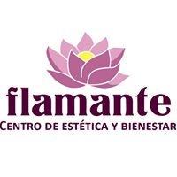 Studio flamante