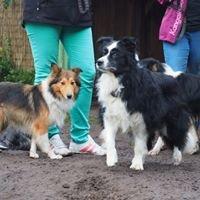 Hundeschule & Hundepension Pfote