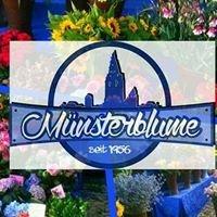 Oliver's Münsterblume