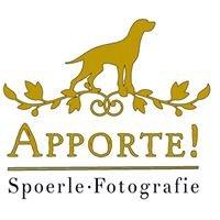 Apporte • Jagdhunde-Fotografie