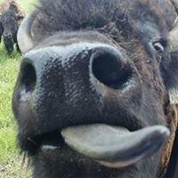 Rocky Hollow Buffalo Company