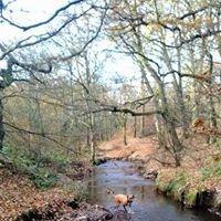 Hopwood Woods