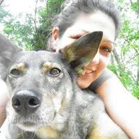 Hundepositivführen Martina Grasser