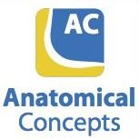 Anatomical Concepts (UK) Ltd