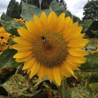 """Sonnenblume """"wenn's kreativ sein soll"""""""