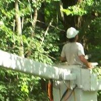 STEVEN'S TREE SERVICE