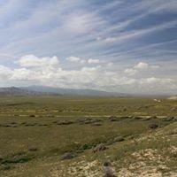 Carrizo Plains National Monument