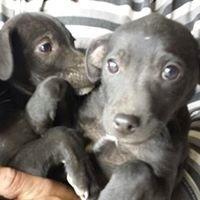 Perros Abandonados Burgos Adopta