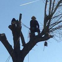 Palmer Tree Services