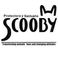 Protectora y Santuario Scooby