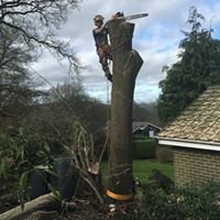 Dennis Walker & Son Tree Services