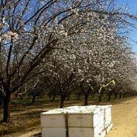 Ashurst Bee Company
