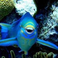 Bermuda Sub Aqua Club