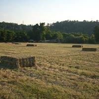 Fazenda Minola