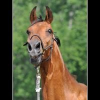 Scarlet Rose Farm Equine-Rescue