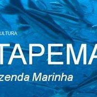 Maricultura Itapema