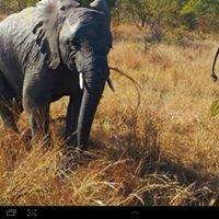 Nambiti Big 5 Private Game Reserve