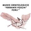 """Museo Ornitologico """"Ferrante Foschi"""""""