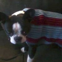Kelly's Doggie Sweaters & Crocheted Treasures