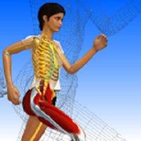 Anatomie 3D Université Lyon