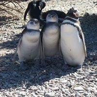 Punta Tombo Chubut Patagonia Argentina