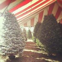 Los Robles Christmas Trees