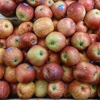 Brixham fruit & veg