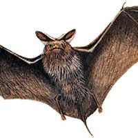 The Martha's Vineyard Bat Killer