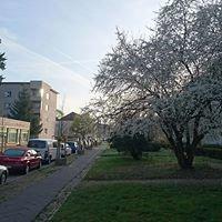 Pankow Kissingenviertel